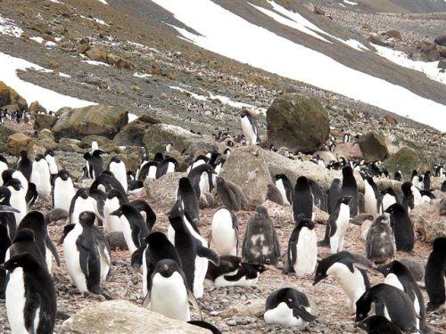 Antarctica 241