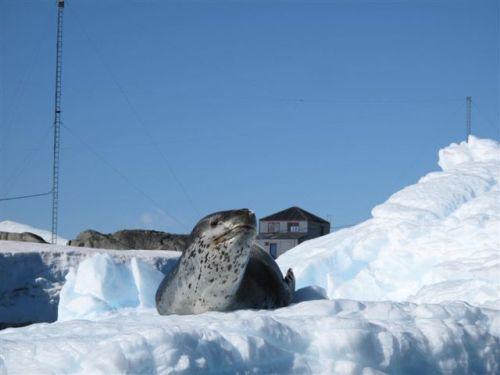 Antarctica 469