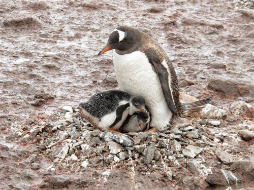 Antarctica 765
