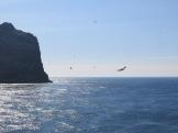 Flying gannets
